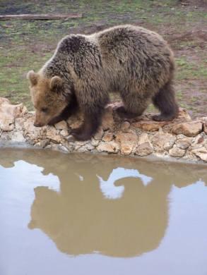 kuterevo bears